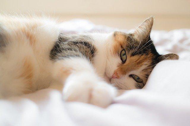 odpočívající kočka